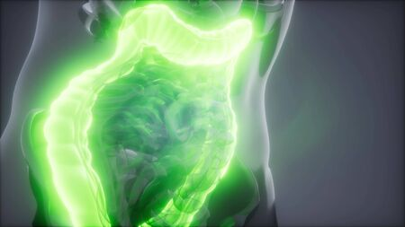 Photo for science anatomy scan of human colon glowing - Royalty Free Image