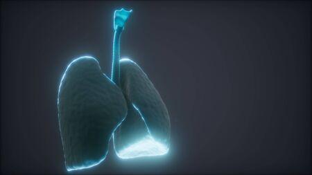 Photo pour 3d animation of human lungs - image libre de droit