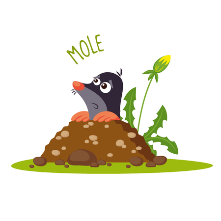 Illustration pour Mole vector illustration isolated on white background - image libre de droit