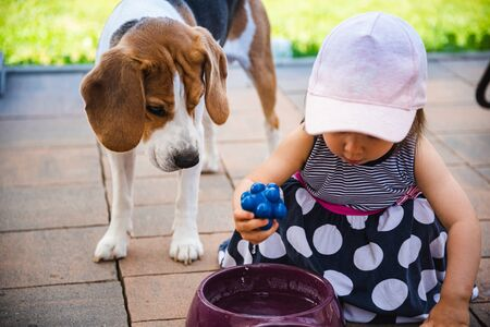 Photo for Baby girl together with beagle dog in garden in summer day. Domestic animal with children concept. - Royalty Free Image