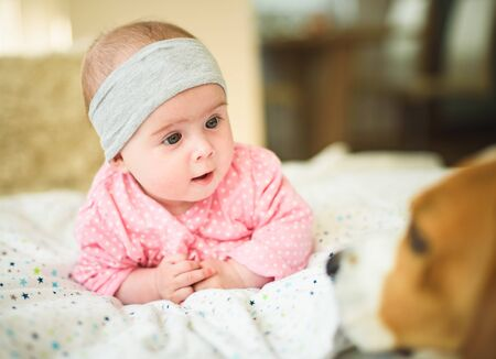 Photo pour Cute 6 months old Baby girl infant on a bed on her belly with head up looking at beagle dog. Natural light - image libre de droit