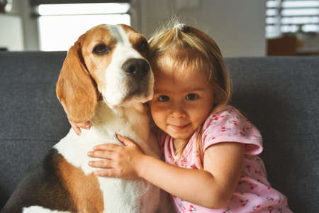 Photo pour Child hugging tight Beagle dog in bright room. Dog with a cute caucasian baby girl on sofa. Child with dog concept - image libre de droit