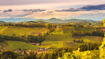 Photo for South styria vineyards landscape, near Gamlitz, Austria, Eckberg, Europe. Grape hills view from wine road in autumn - Royalty Free Image