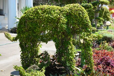 Photo for Topiary gardens. elephants created from bushes at green animals. landscape design. Grass figure of elephants, topiary figure - Royalty Free Image