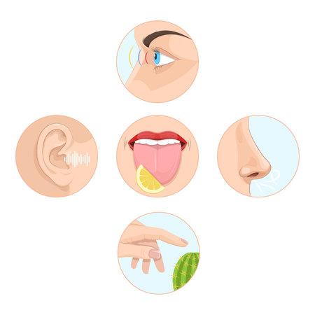 Set of five senses of man. Anatomy of human organs.