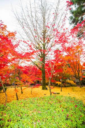 Photo pour Autumn at Eikando Zenrinji temple,Kyoto. - image libre de droit