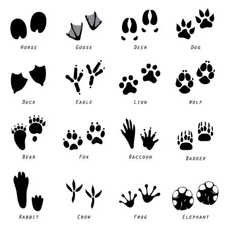 Animal Spoor Footprints Icon Vector