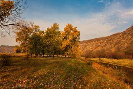 Photo for Autumn landscape. Yellow field and blue sky. - Royalty Free Image