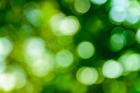 Photo for Abstract and defocused green bokeh background. Ecological concept - Royalty Free Image