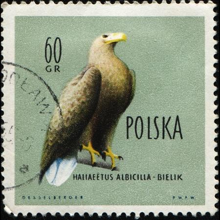 POLAND - CIRCA 1960: A stamp printed in Poland shows White-tailed Eagle also known as the Sea Eagle, Erne (sometimes Ern), or White-tailed Sea-eagle  - Haliaeetus albicilla, circa 1960