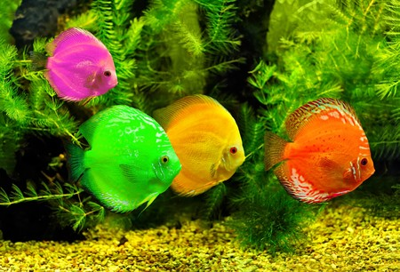 Colorful fishes in the water