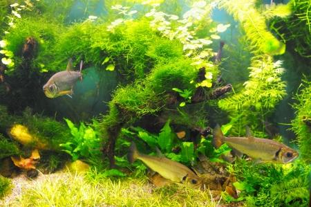 Fish in the algae underwater