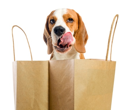 Licking lips dog before an open paper bag.