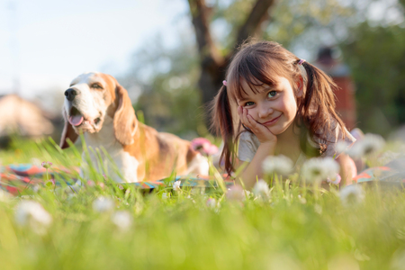 Photo pour Happy little girl playing with dog in garden. Four-year-old girl on a Sunny summer day with a Beagle on a lawn with daisies. - image libre de droit