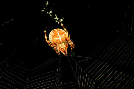 Thickness spider at night