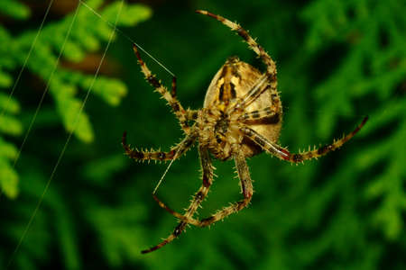 Thickness spider Angle