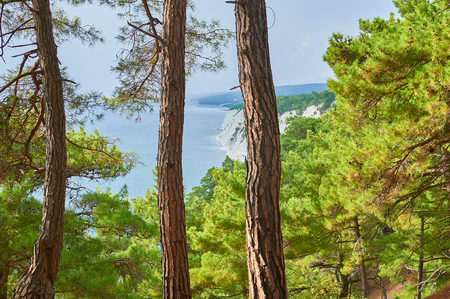 A breathtaking view from the relic pine forest (Pinus brutia, Turkish pine) on the expanses of the Black Sea.