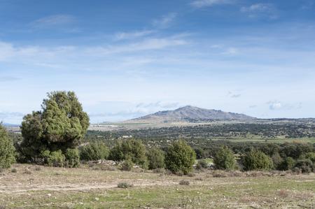 Holm Oak and Juniper dehesa in Guadarrama Mountains, Madrid, Spain. At the background, San Pedro Peak