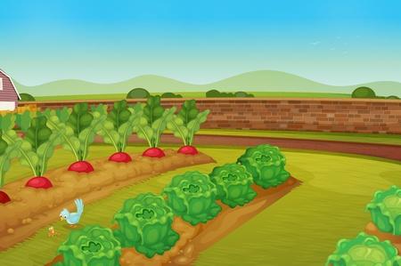 Illustration pour illustration of a vegie patch - image libre de droit