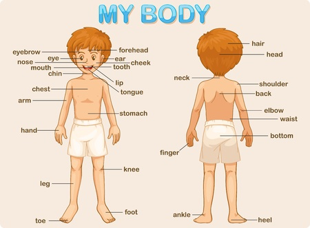 Illustration poster of the parts of the body