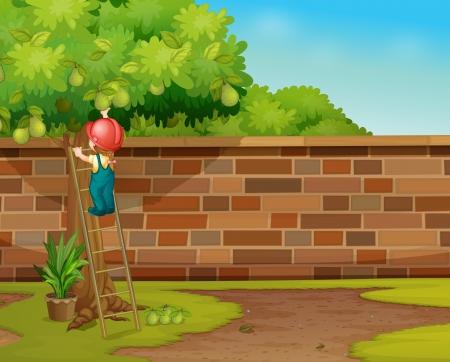 Illustration of boy picking fruit