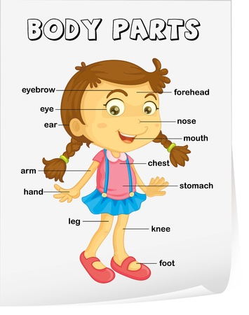 Vocabulary worksheet - parts of the body