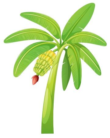 Illustration pour illustration of banana tree on a white background - image libre de droit