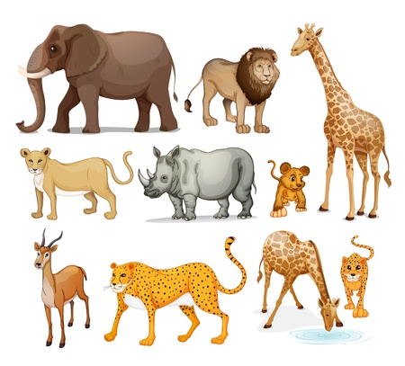 Photo for illustration of Animals in on a white background - Royalty Free Image