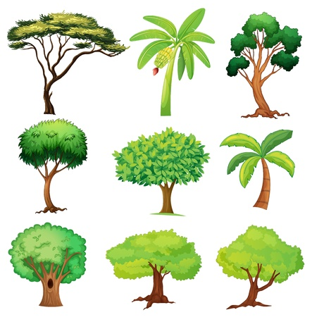 Illustration of various trees on a white background