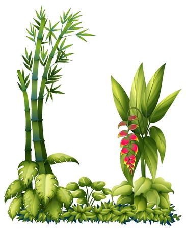 Illustration for Illustration of green plants on a white background - Royalty Free Image
