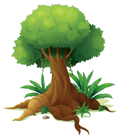 Illustration of a big tree on a white background