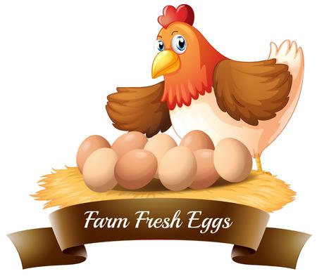 Vektor für Illustration of the fresh eggs from the farm on a white background - Lizenzfreies Bild