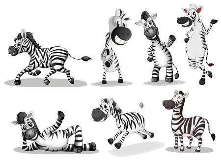 Illustration of the playful zebras on a white background