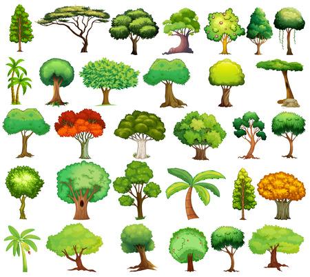 Illustration of different kind of tree