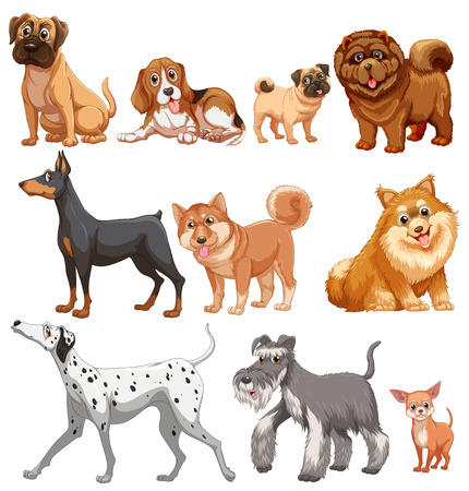 Illustration of different kind of dogs