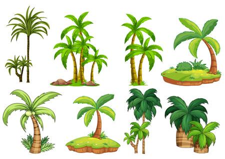 Illustration pour Illustration of different kind of palm trees - image libre de droit