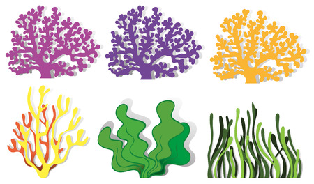 Different kind of coral reefs illustration