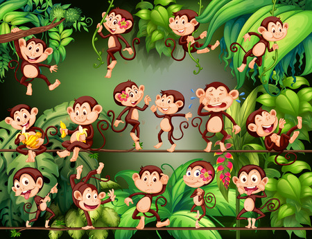 Monkeys doing different things in the jungle illustration