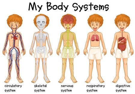 Illustration pour Different system in human illustration - image libre de droit