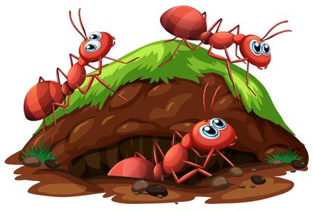 Illustration pour Worker Ants on White Background illustration - image libre de droit
