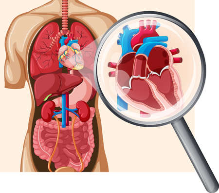 Illustration pour Human Heart and Circulatory System illustration - image libre de droit