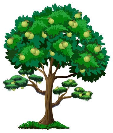 Illustration pour Guava fruit tree isolated on white background illustration - image libre de droit