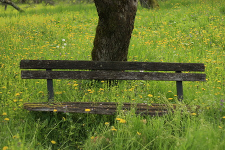 bench in the field