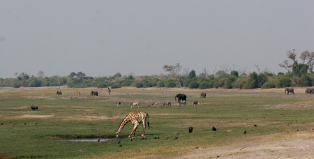 Chobe riverfront in Botswana teaming with wildlife
