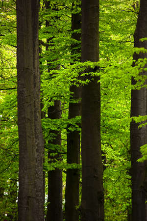 Picture of a beautiful forest with high trunks and green foliage
