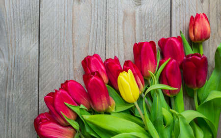 Photo pour Festive greeting card with bouquet of blooming red tulips. Spring background with copy space - image libre de droit