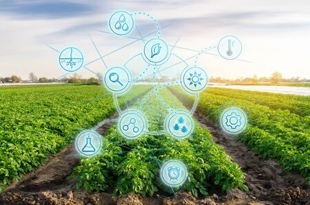 Foto de High technologies and innovations in agro-industry. Study quality of soil and crop. Scientific work and development of new methods and selection of varieties. Investing in farming. Potato in the field - Imagen libre de derechos