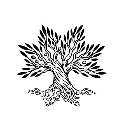 Illustration pour beautiful illustration of olive tree and root logo, in vintage style. - image libre de droit