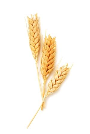 Foto für Golden wheat ears isolated on white background - Lizenzfreies Bild