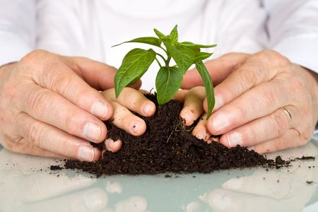 Senior and kids hands pampering a new plant in the pile of soil - generations and education concept, closeup
